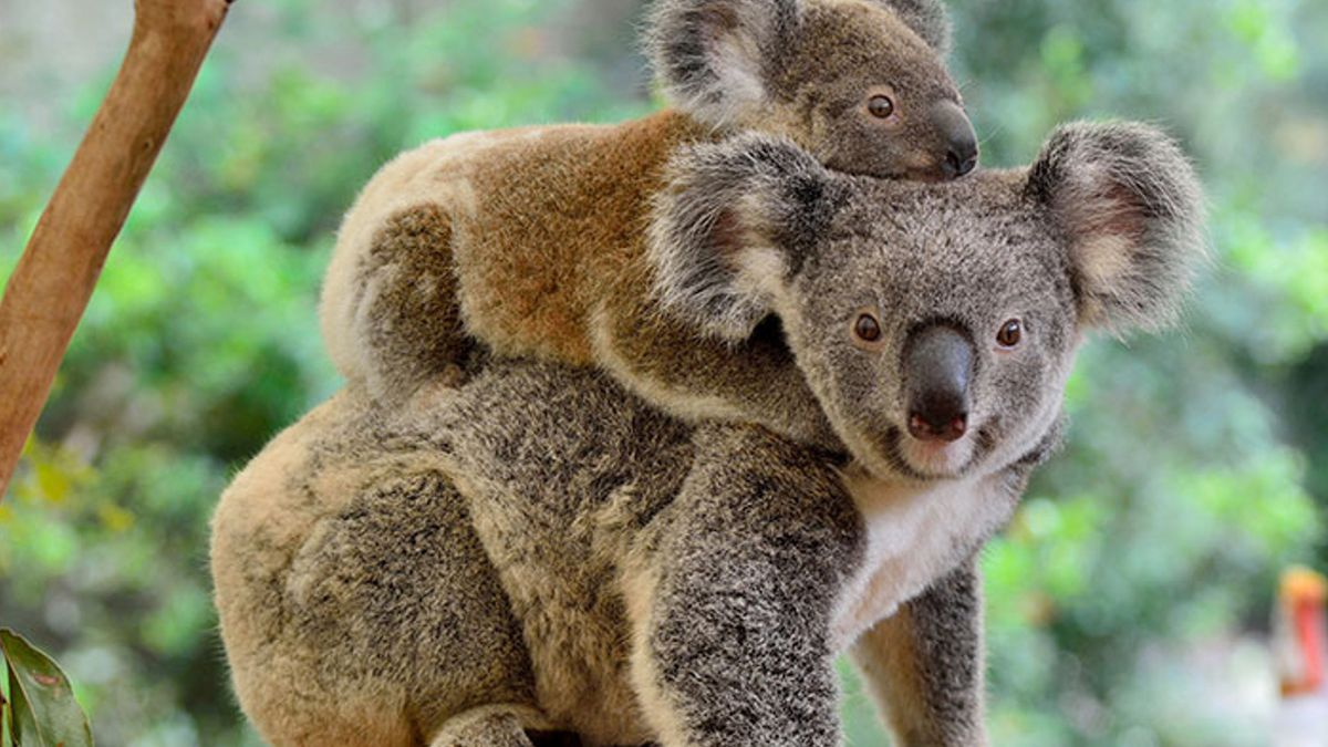 Louisville Zoo offering ways for visitors to help those impacted in Australia