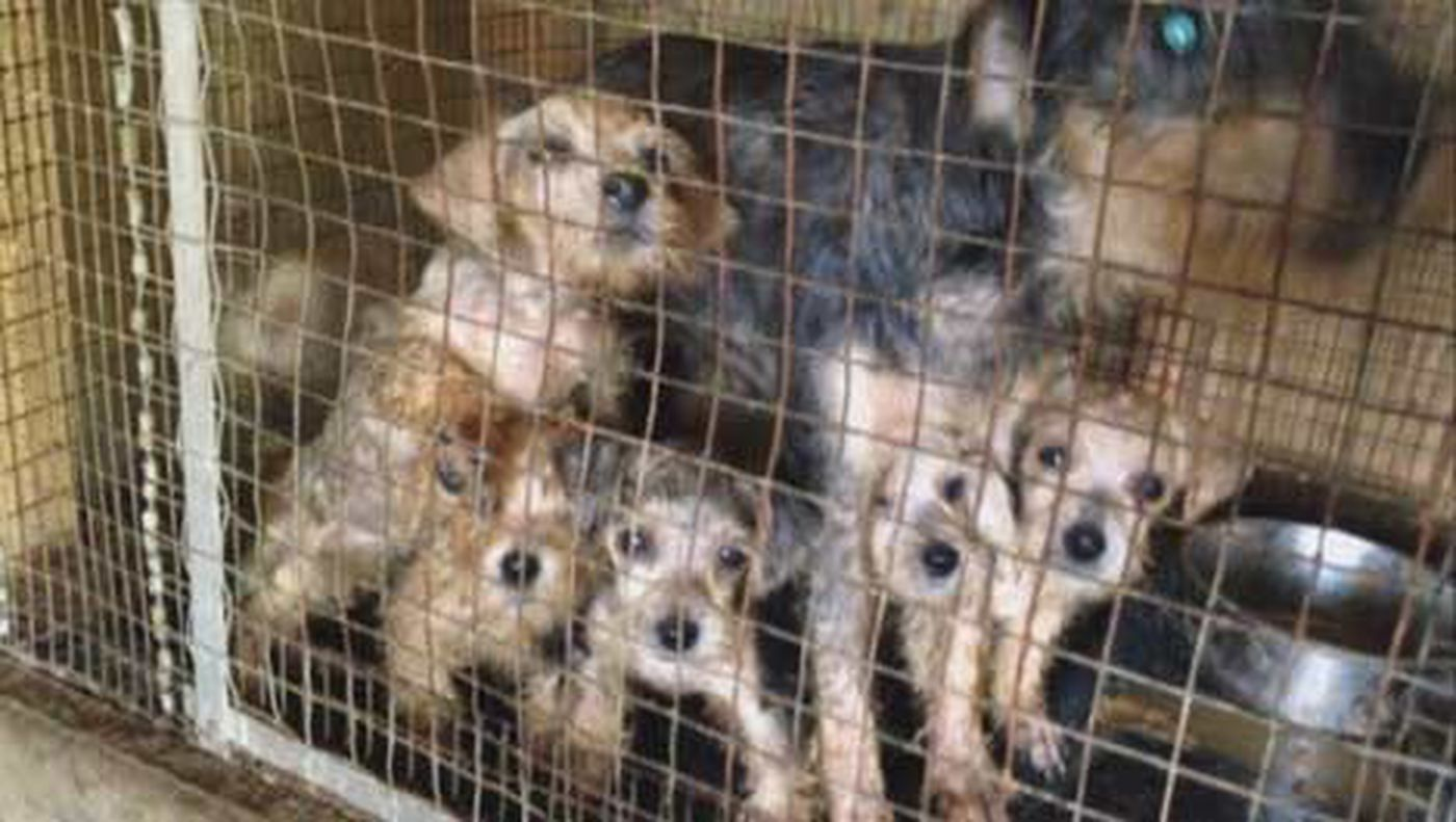 Puppy Mill Stays In Business Despite Animal Cruelty Charge