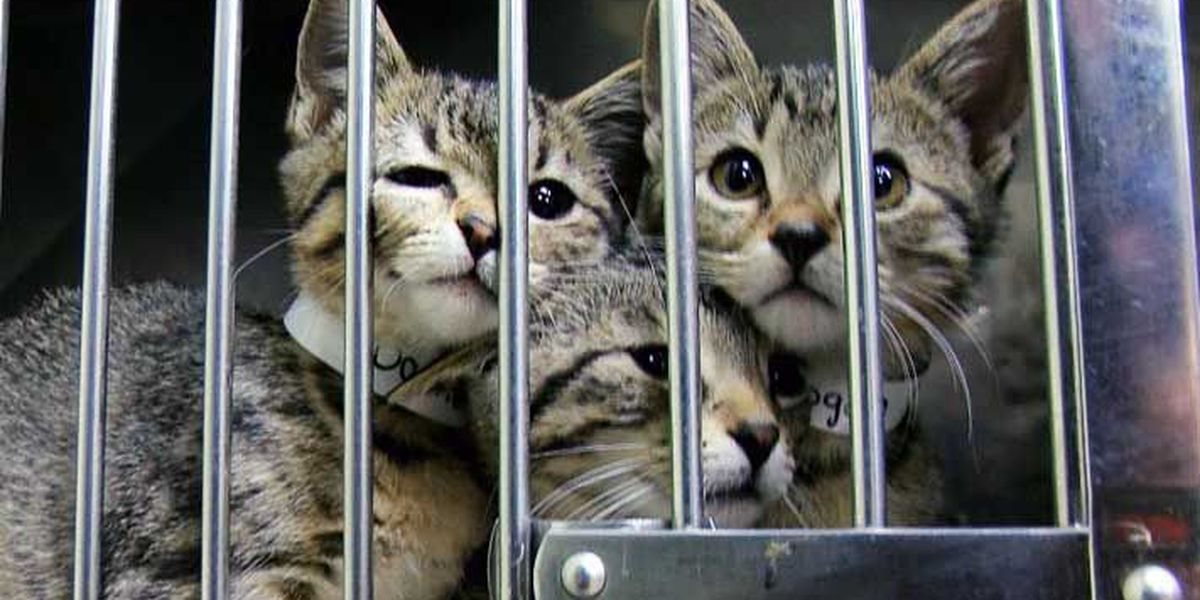 KHS adoption event to hopes to free space for animals affected by hurricanes