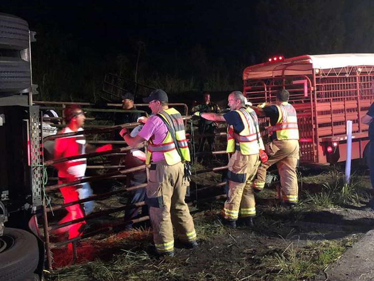 Portion of I-64 in Indiana reopen after cattle hauler overturns