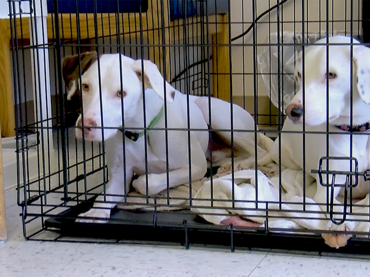 Bill Seeks To Name Shelter Animals Official Kentucky State
