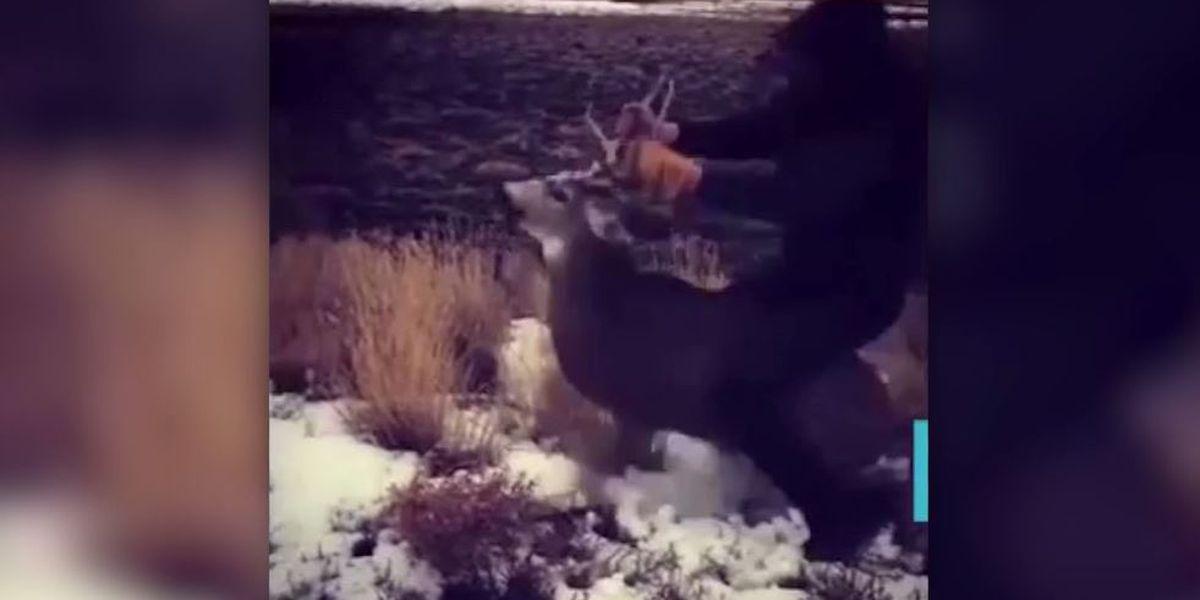 Man, 18, arrested after video shows him riding on back of deer in Oregon