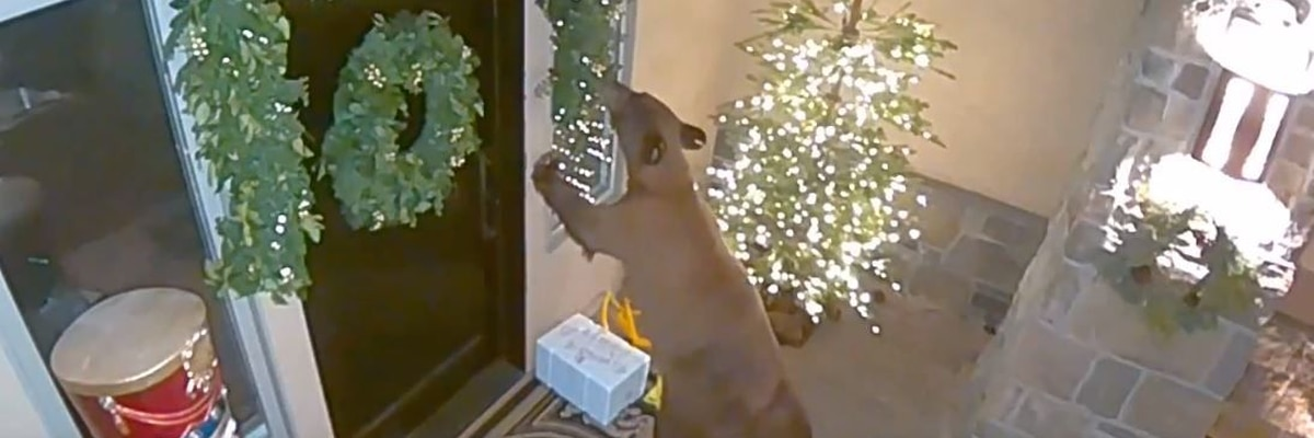 Bear steals package from Nevada porch