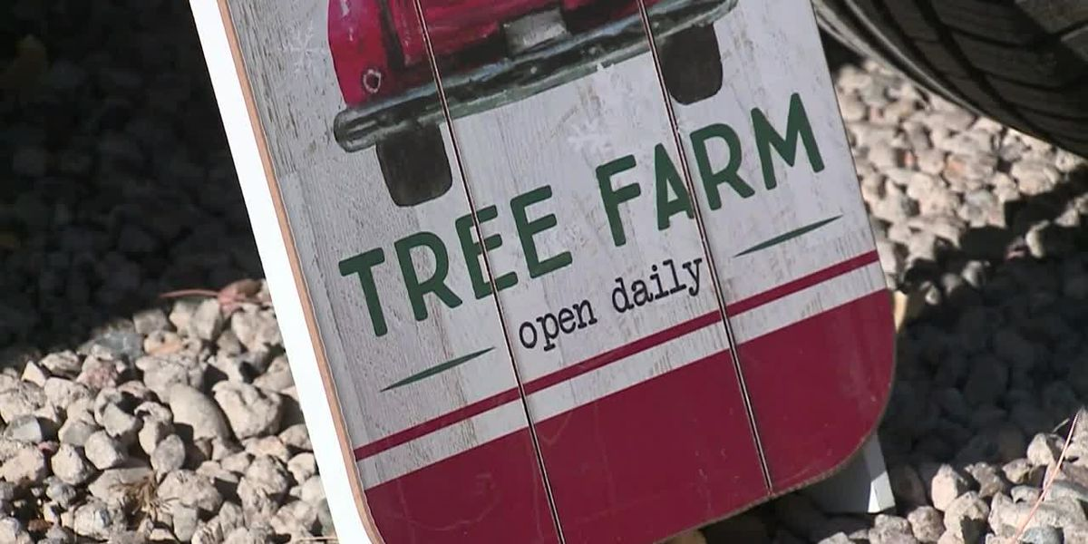 New Mexico Christmas tree lot to give proceeds to local businesses