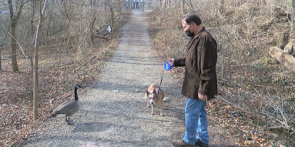 Man & dog's best friend: Goose becomes family pet after being saved