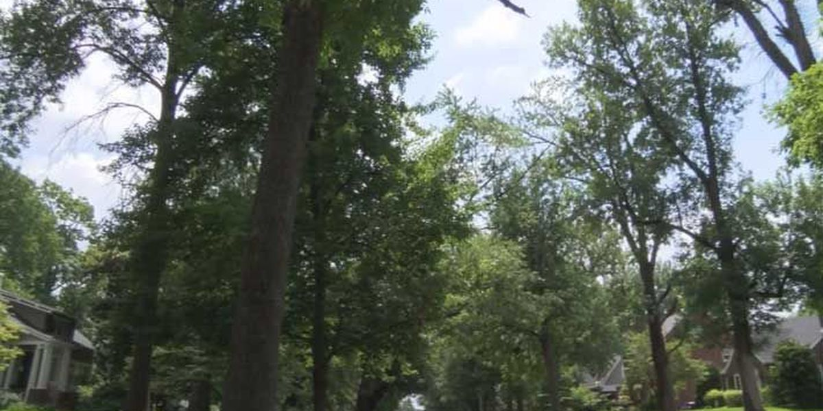 Local organization set to plant 100+ trees in metro Louisville