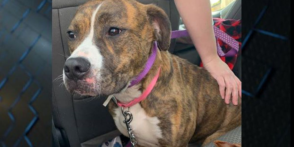 Abandoned dog 'Candy' doing well after being dumped in Evansville