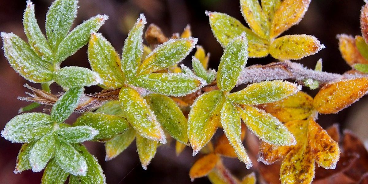 Behind the Forecast: Frost