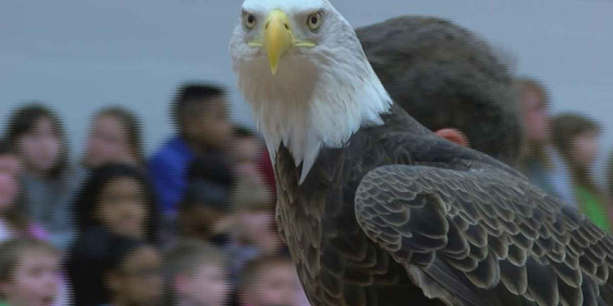 Students get up close and personal with birds of prey