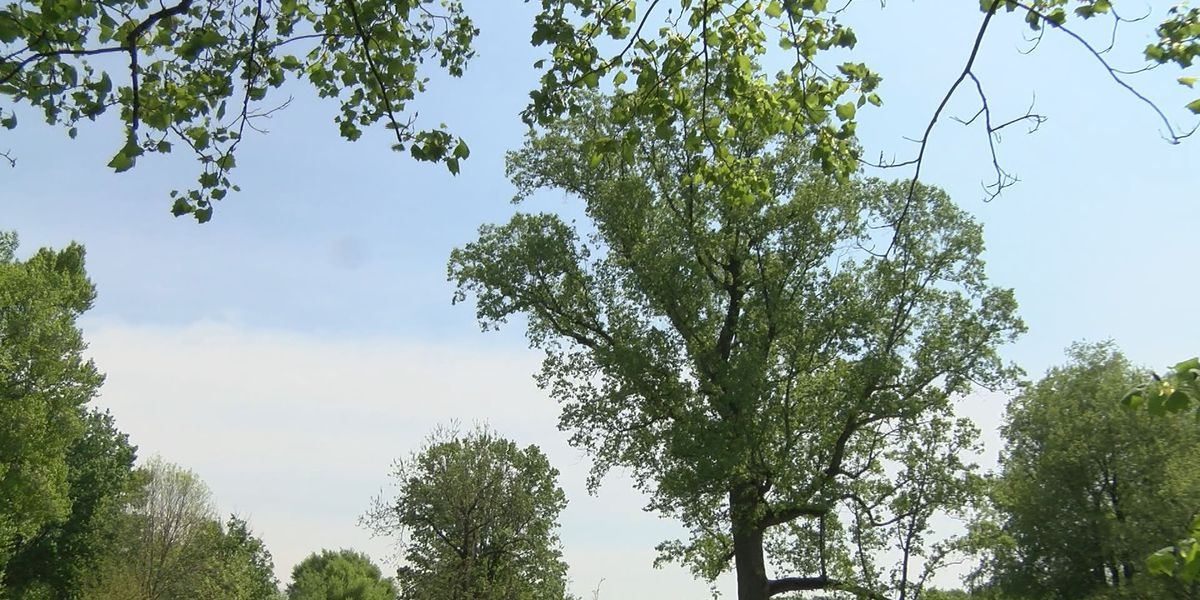 Behind the Forecast: How weather influences Spring allergies