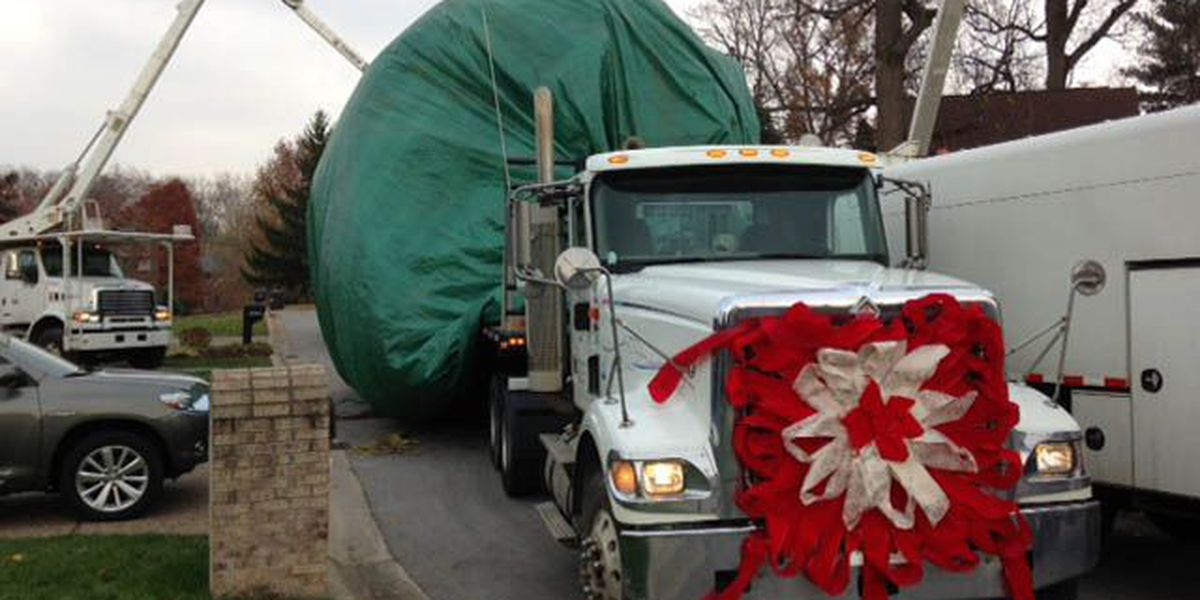 Light Up Louisville tree on its way downtown