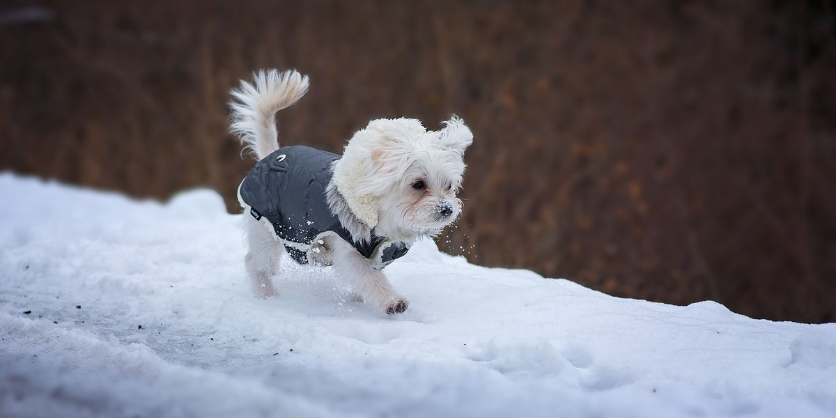 Behind the Forecast: Do's and don'ts of protecting pets in the winter