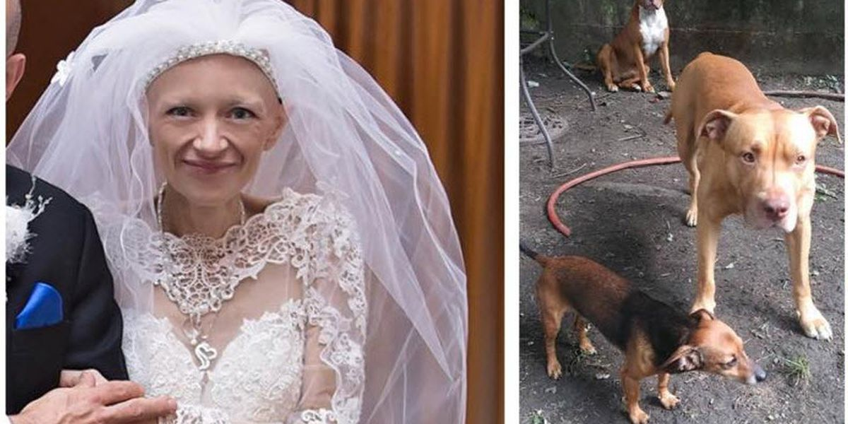Dogs need new home months after community helps with cancer patient's dream wedding