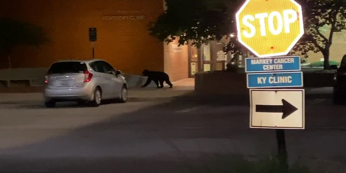 Bear caught on video wandering UK's campus