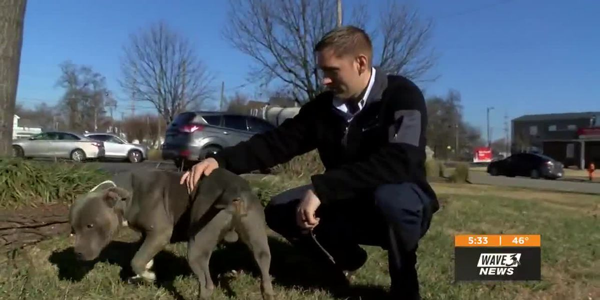 Stranger saves dog running in middle of Bardstown Road