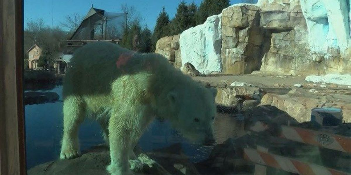 Qannik the polar bear celebrates 5th birthday