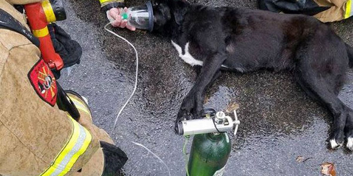 Dog rescued from burning house by Okolona, Zoneton firefighters