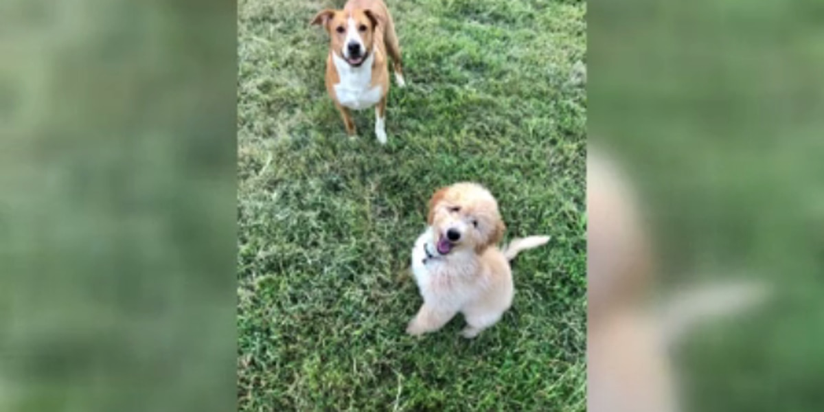 Indiana animal cruelty bill to become law in July