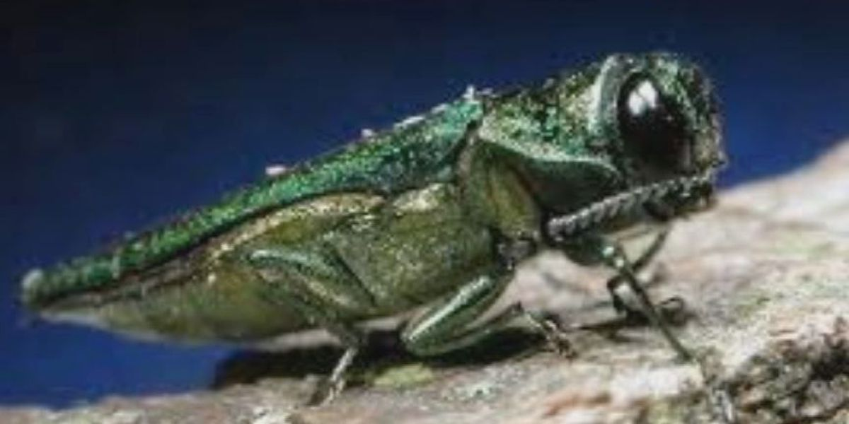 Tiny beetle causing major problems at the Louisville Zoo