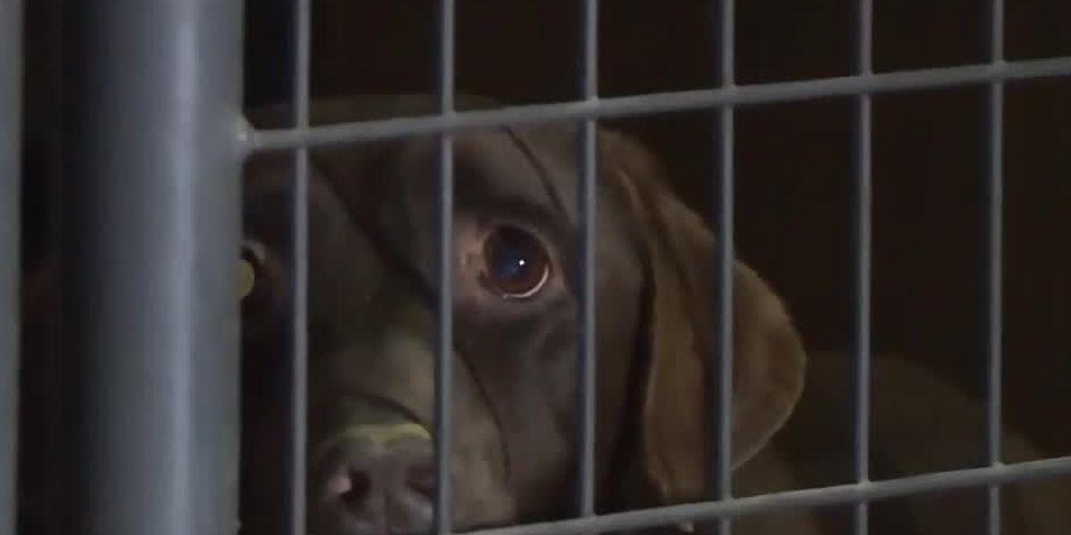 Cincinnati area animal rescuers help with 'horrific' cruelty case in Kentucky