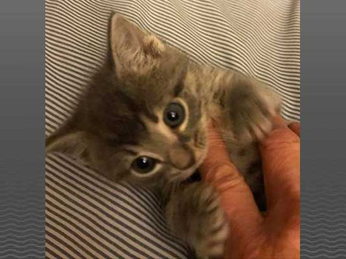 Kitten rescued from trash bag in dumpster behind KY business