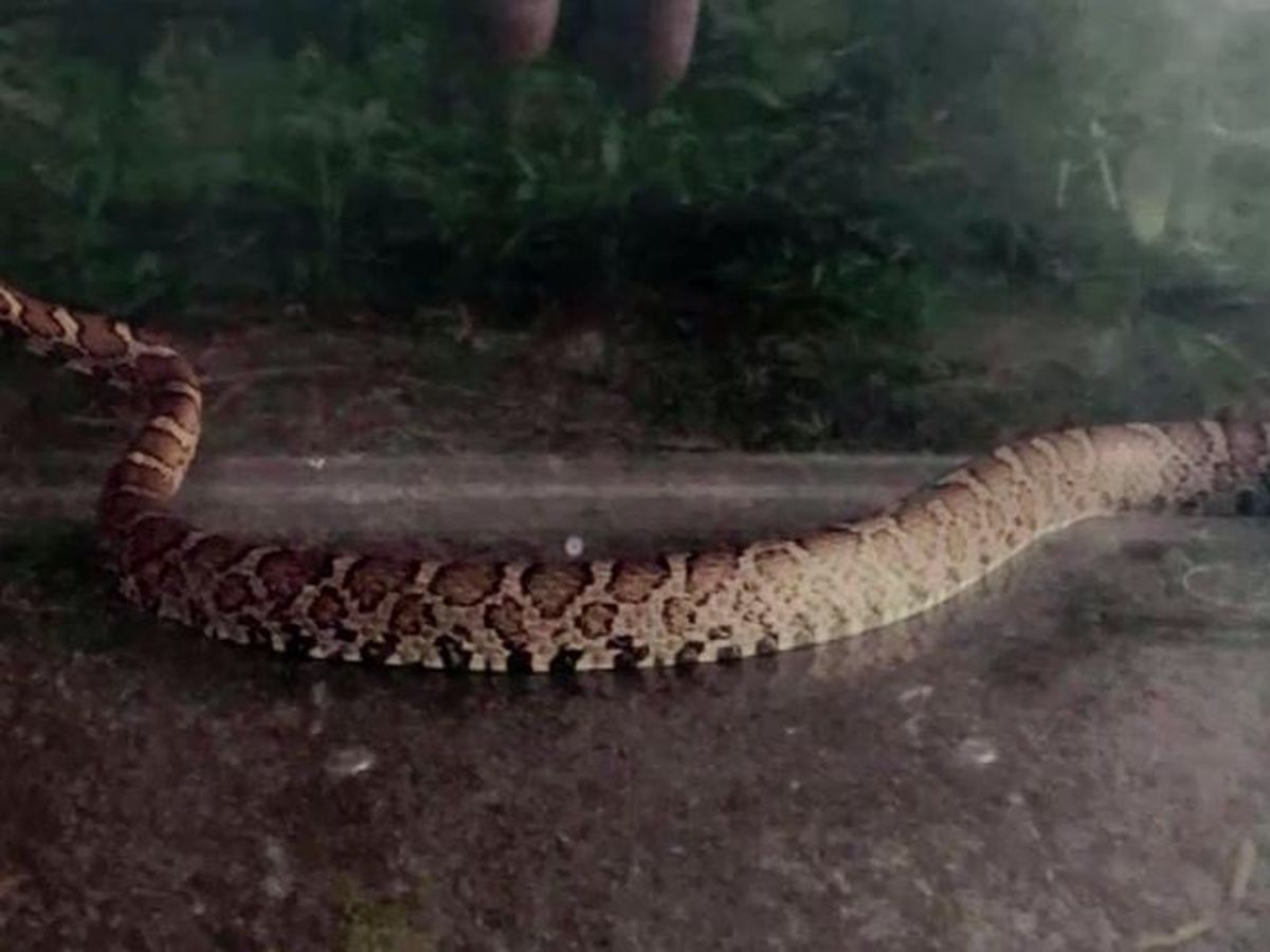 Baby bitten by 5-foot-long snake while playing in Mass. kitchen