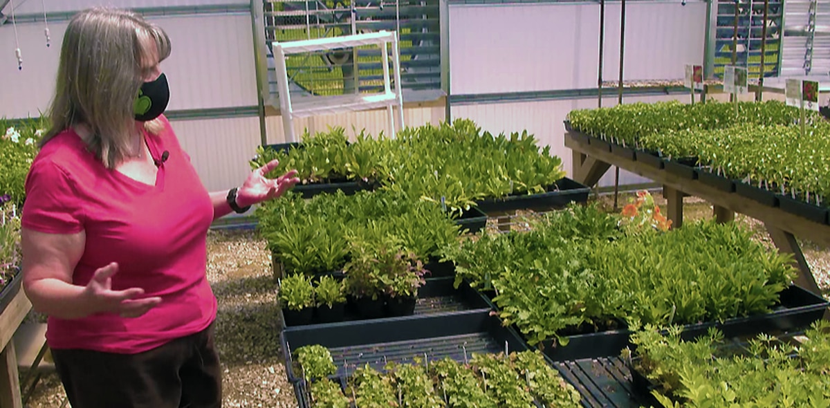 $1,200 worth of plants, equipment stolen Louisville nonprofit's greenhouse