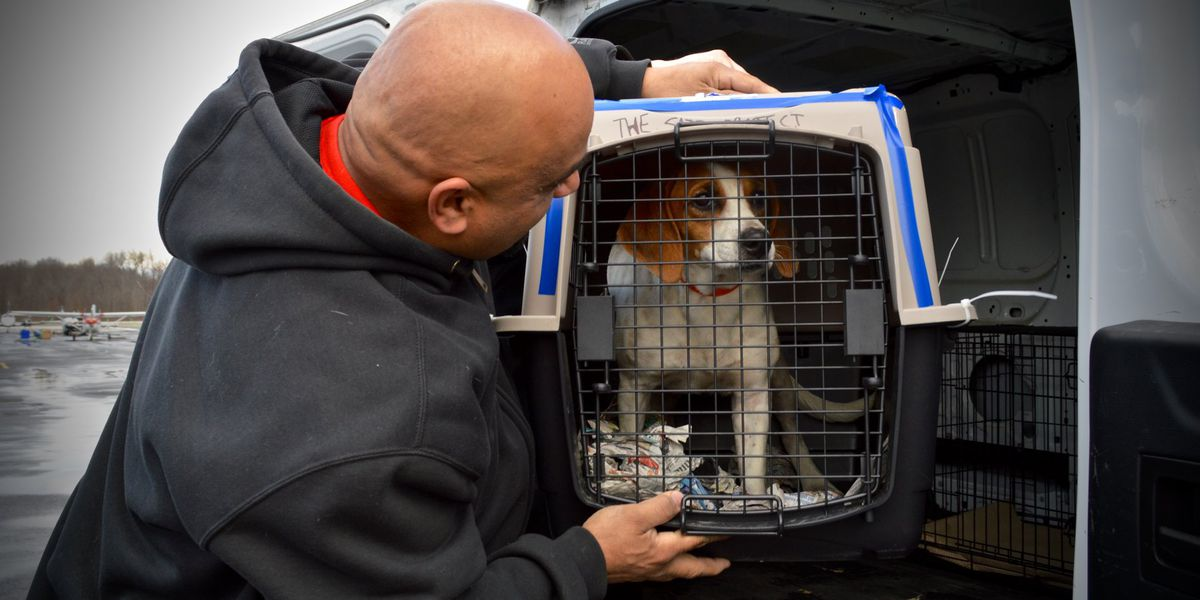 At-risk shelter pets flown from Puerto Rico to New Jersey after earthquakes