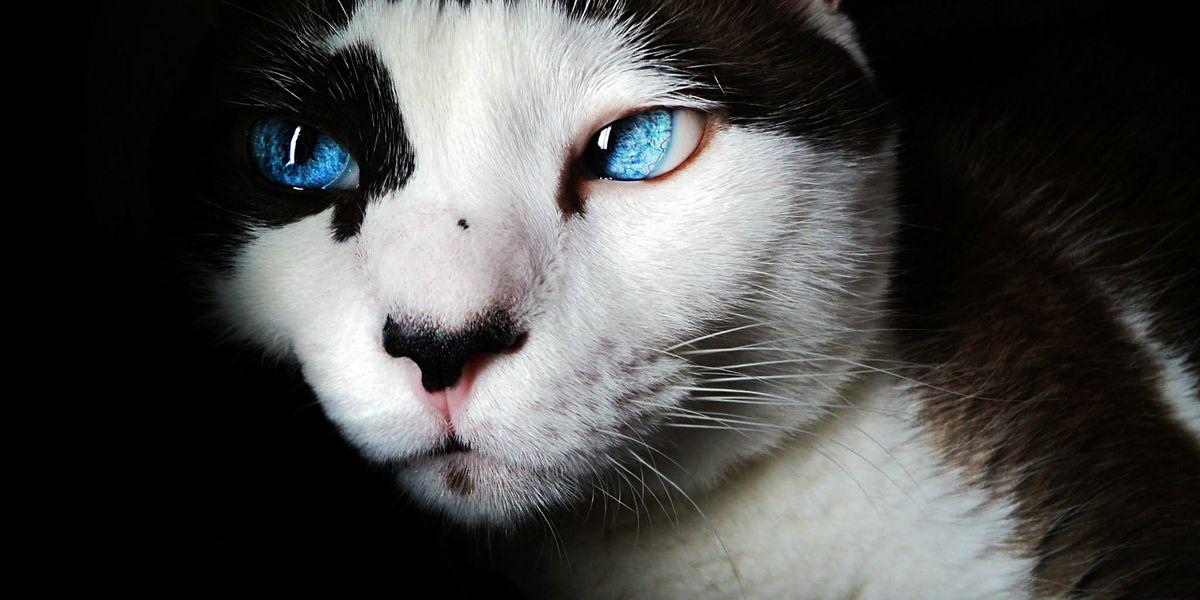 Angie's List: Mobile vets provide convenient, stress-free pet care