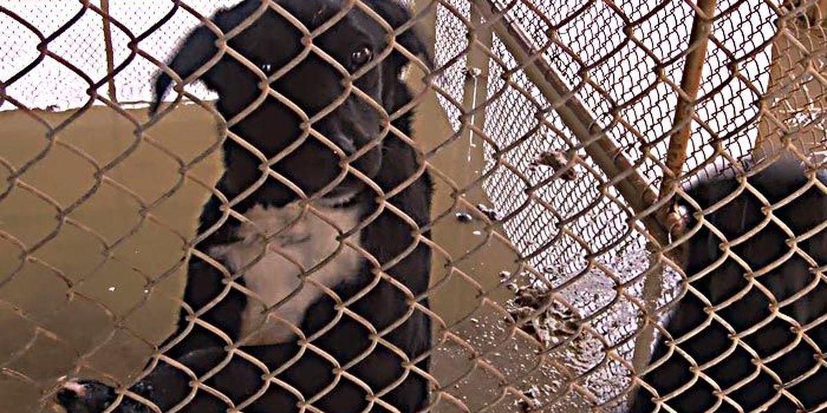 TONIGHT AT 11: Animal shelter standards law all bark, no bite