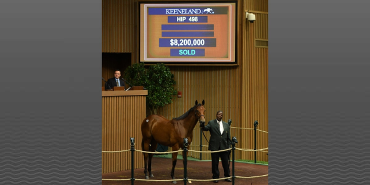 American Pharoah filly sells for record $8.2 million