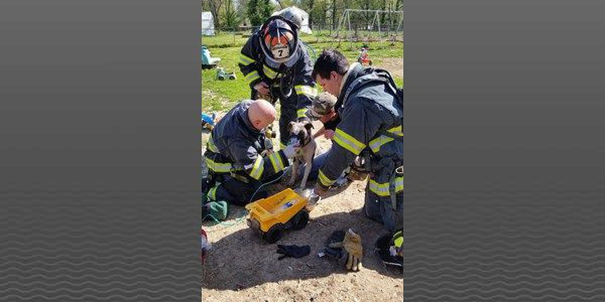 Firefighters save dogs from house fire in Valley Station