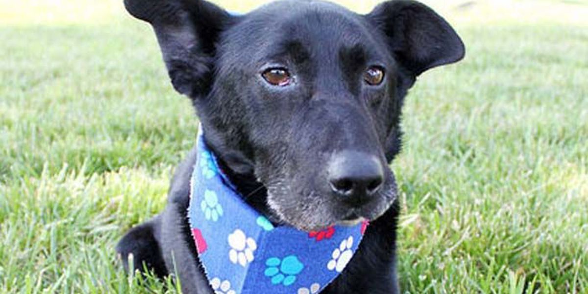 SLIDESHOW: This week's adorable, adoptable pets from KHS