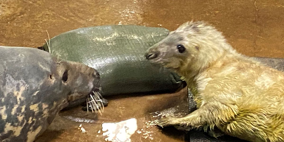 Louisville Zoo reveals the name of the new gray seal pup