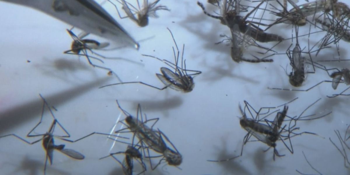 First human case in over 20 years of rare mosquito-borne virus reported in Indiana