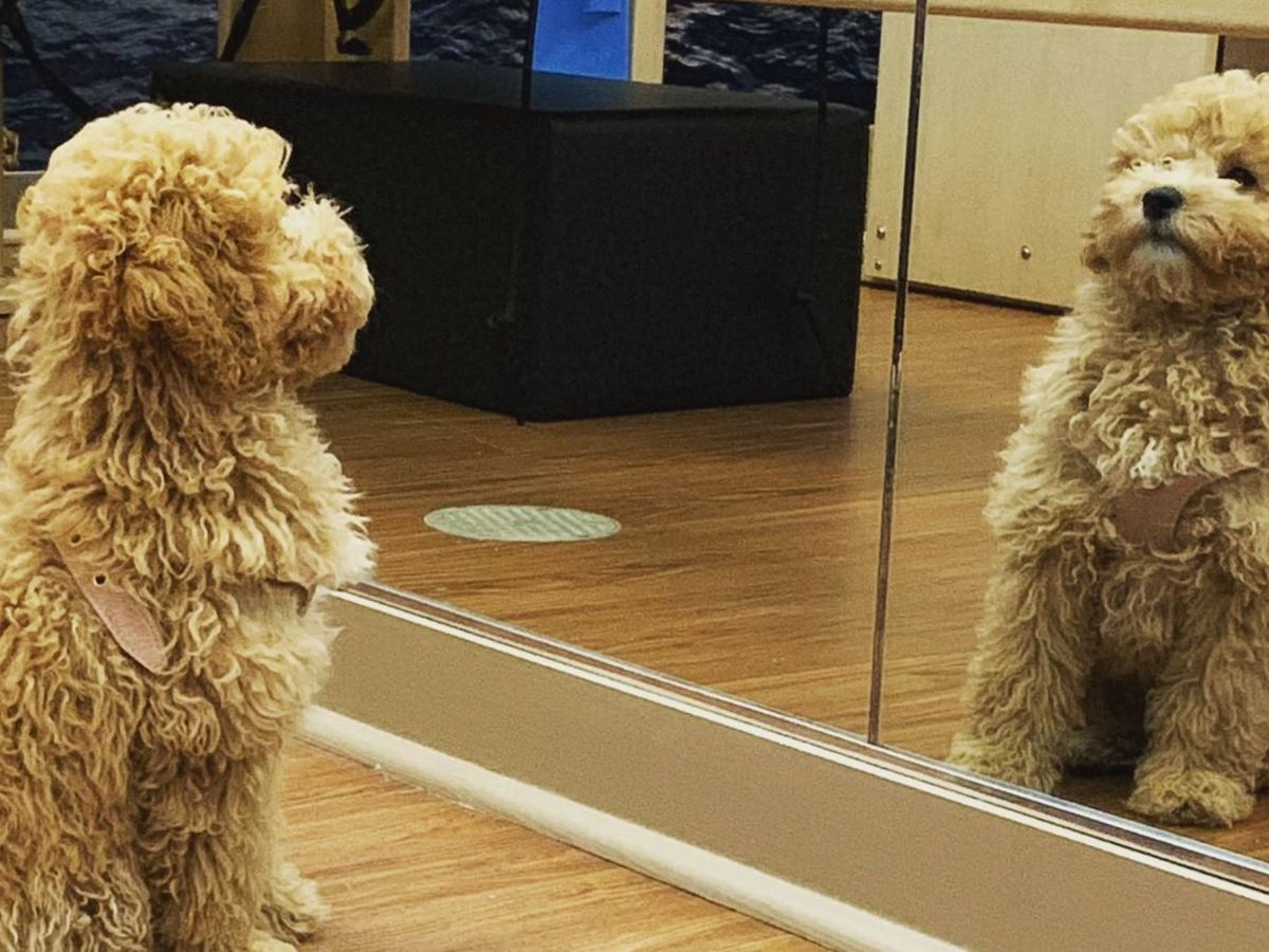 Meet Louisville's cloned dog