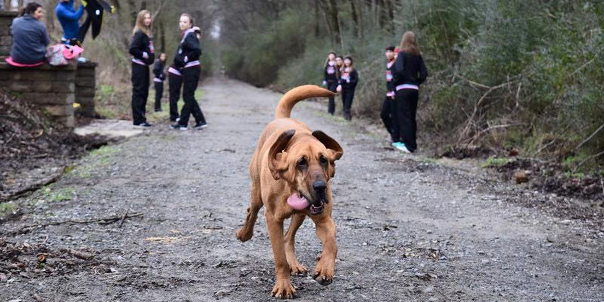 Pee break turns into big finish for dog in half-marathon
