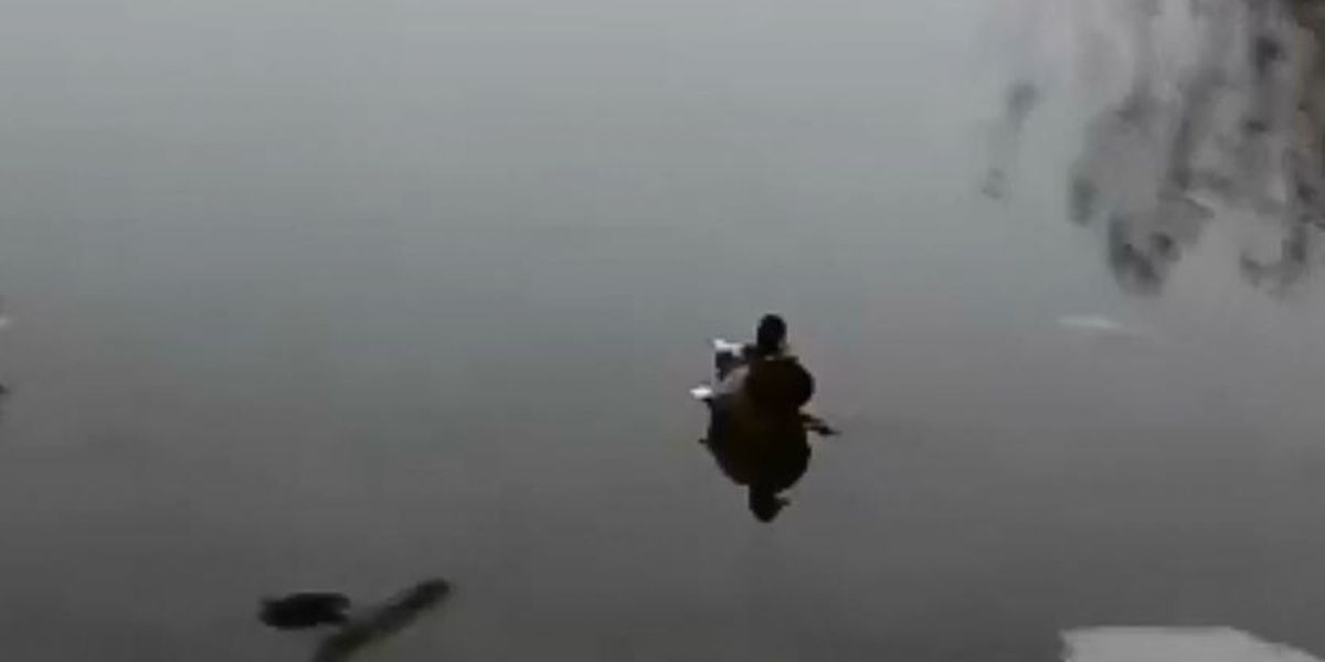 Duck landing on ice is the best thing on the internet