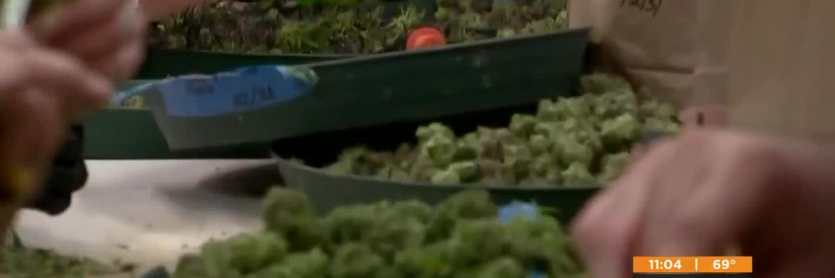 Jefferson County changes marijuana prosecution policy