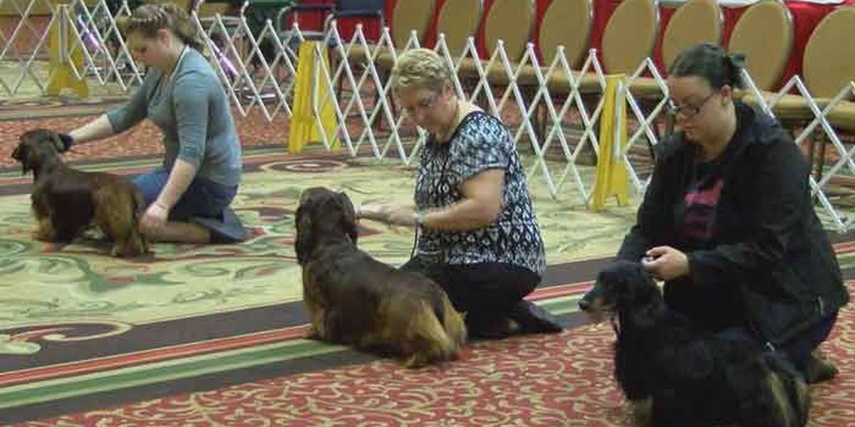 Dachshund National Show comes to Louisville
