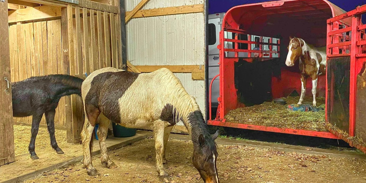 Kentucky Humane Society takes in third horse rescued from Eastern Kentucky herd