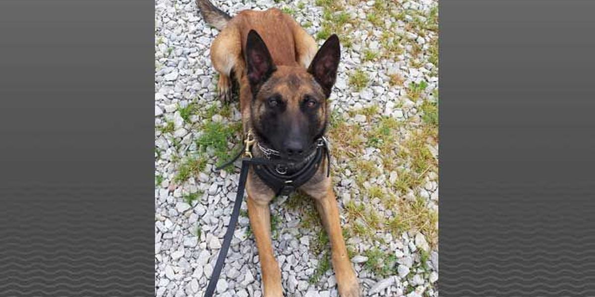 Work of ISP K-9 leads to drug busts