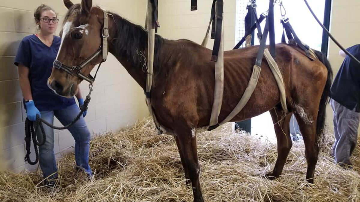 Supplies needed to help emaciated horses in Jessamine County