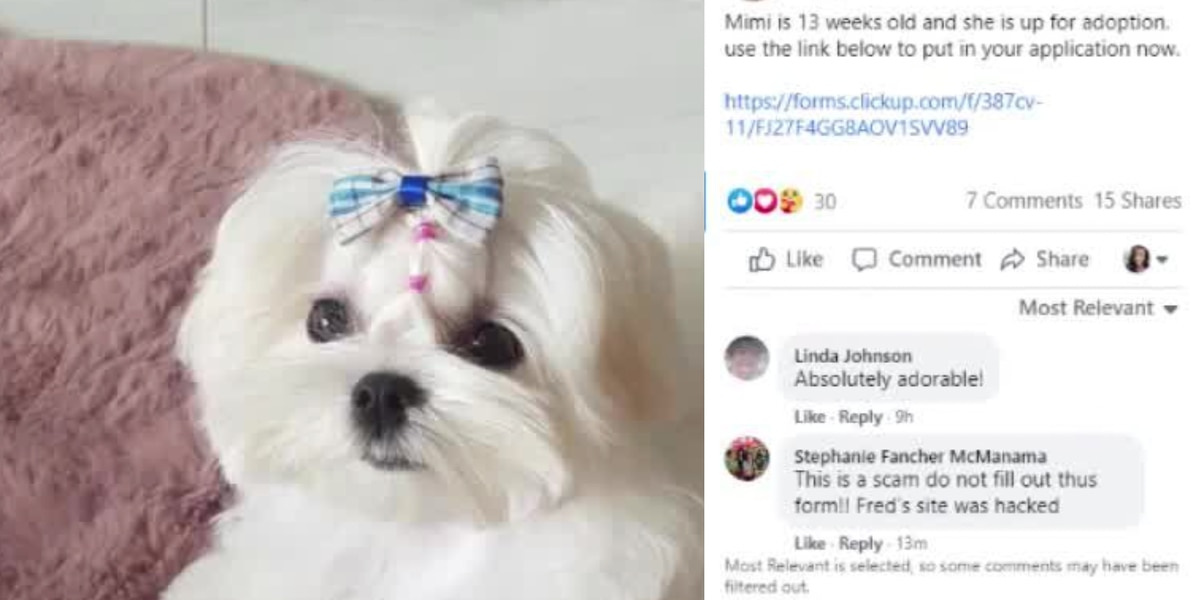 Hackers targeting animal rescues, potential adopters with online scam