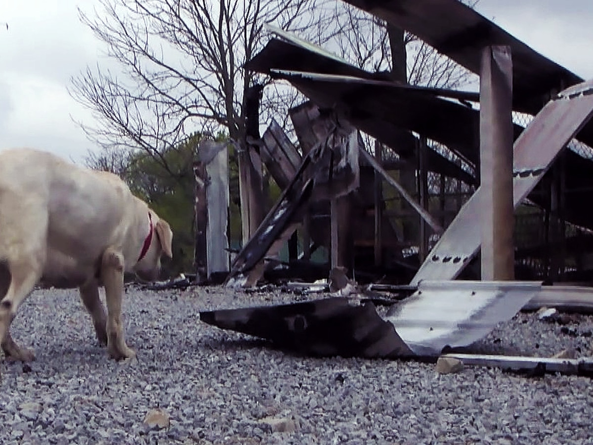 Kennel fire that killed more than 50 dogs ruled accidental