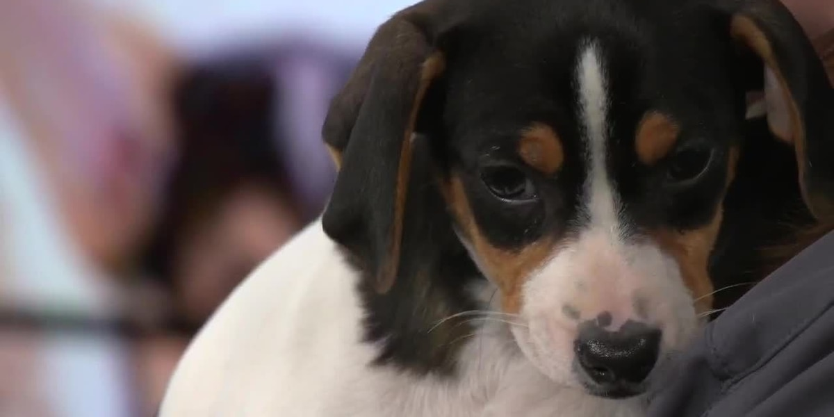 Adoption fees slashed during 'Empty the Shelters' event at Kentucky Humane Society