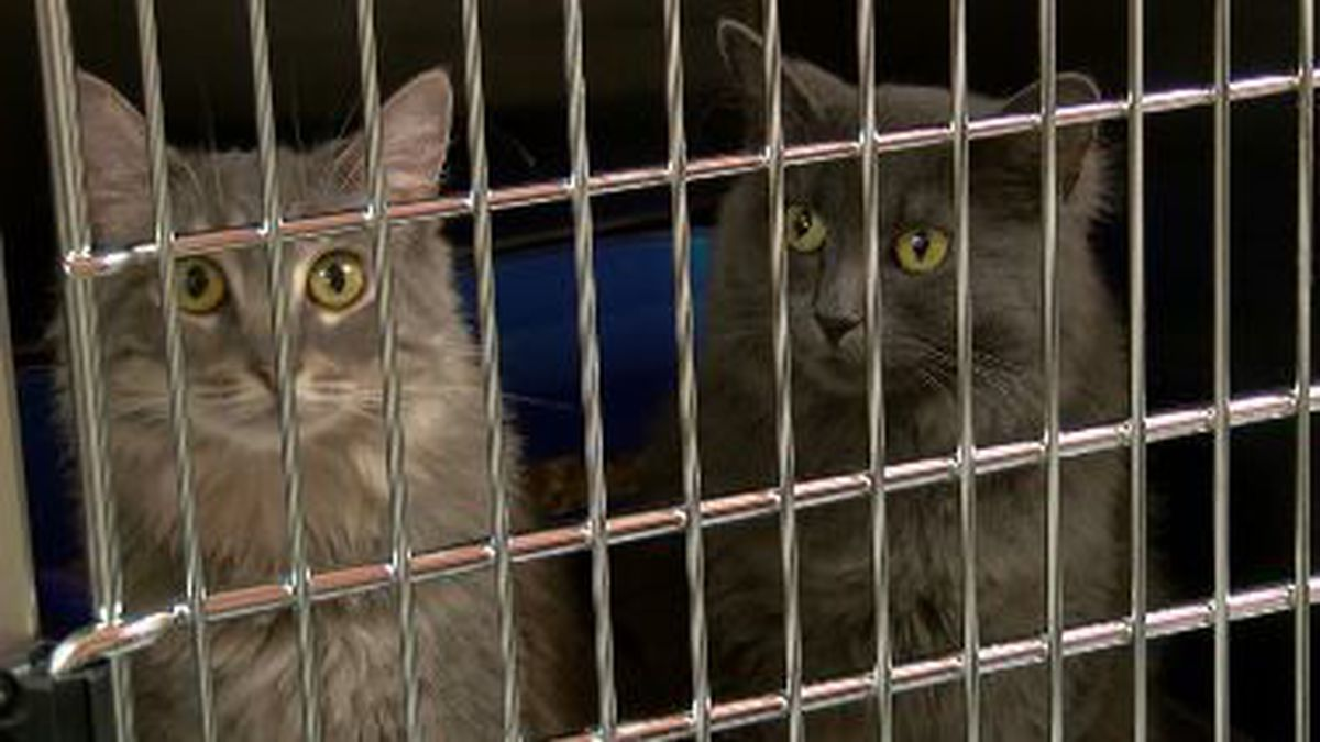 COVID-19 restrictions mean fewer animals at local shelters