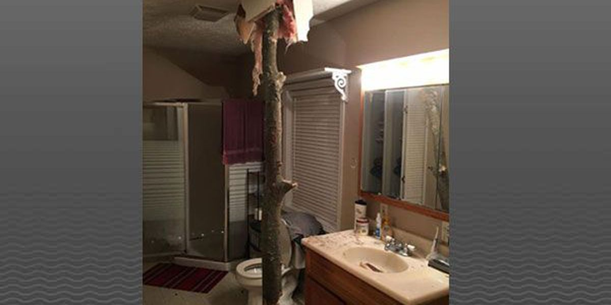 Indiana man who hit snooze button wakes up to tree in bathroom