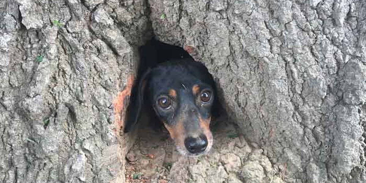 KSP Troopers rescue dog trapped in a tree