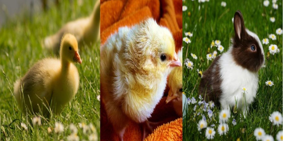 Giving a pet for Easter? Don't do it
